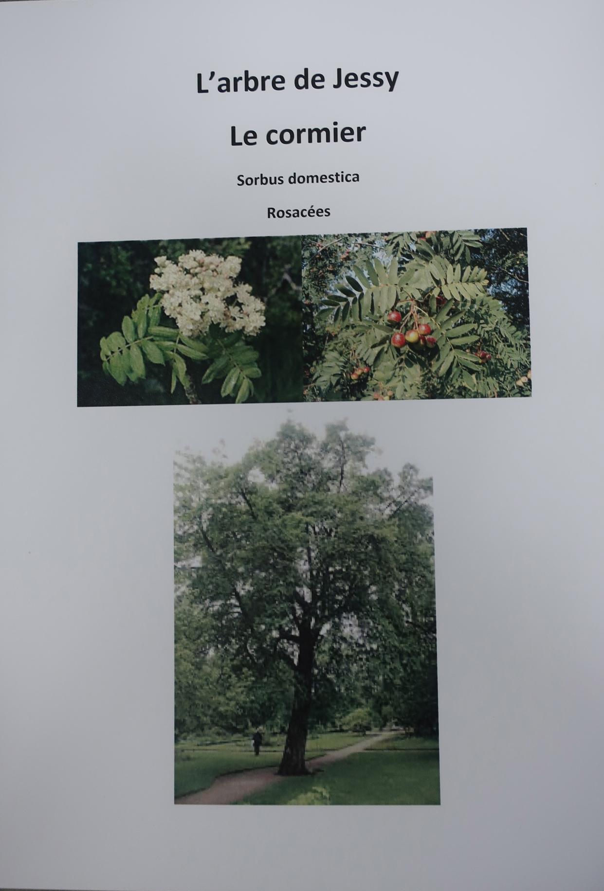 Inauguration des arbres Jessy, Constance, Gabriel